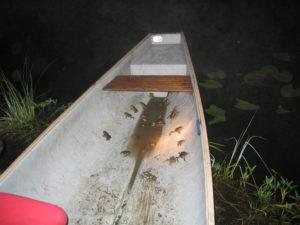 frogs in canoe