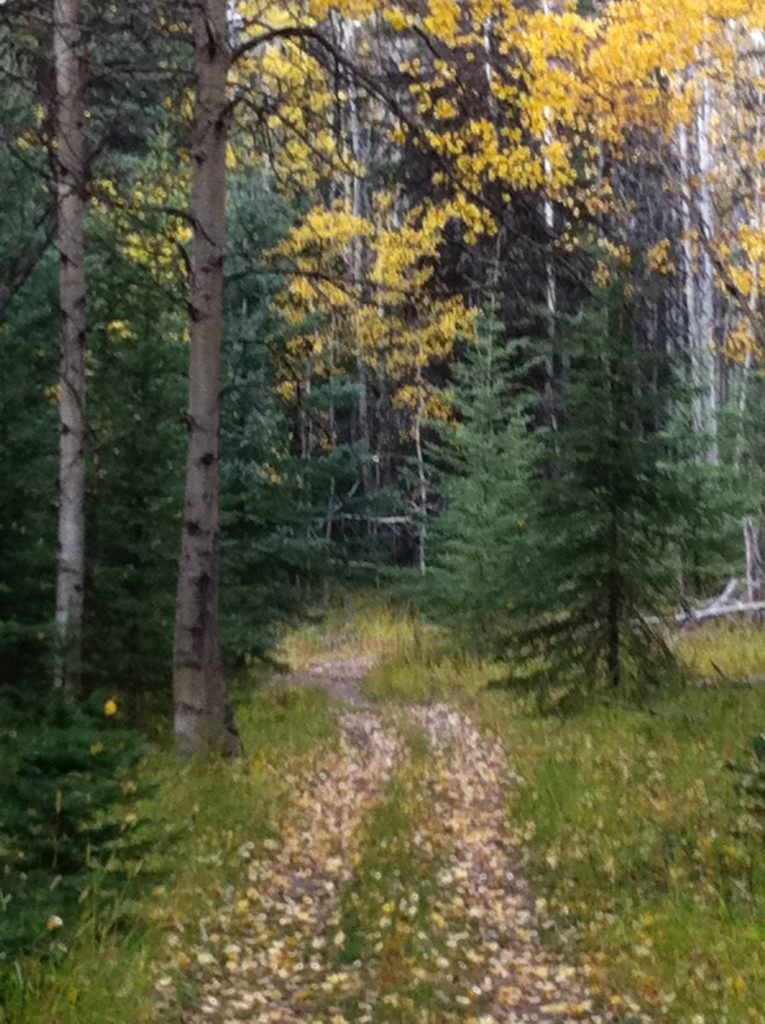 Autumn, hike, aspen