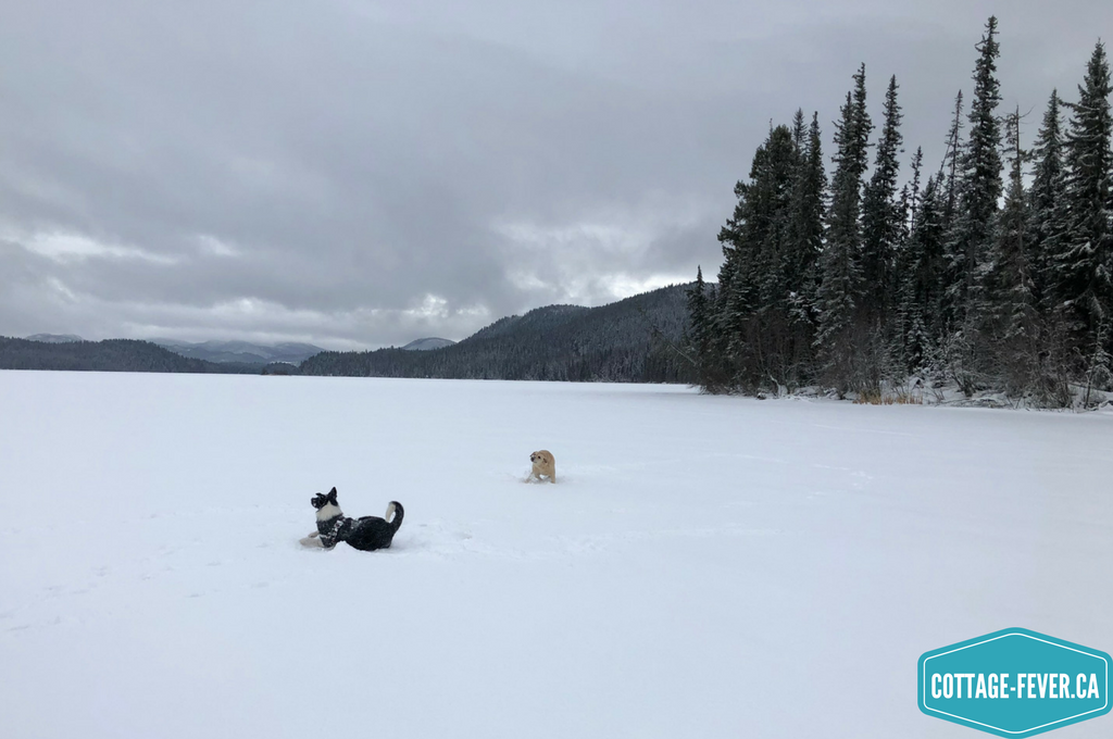 dogs, frozen lake, snow