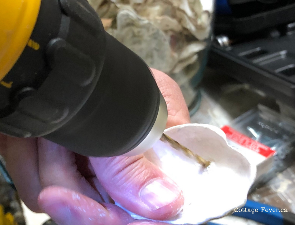 drilling hole in oyster shell